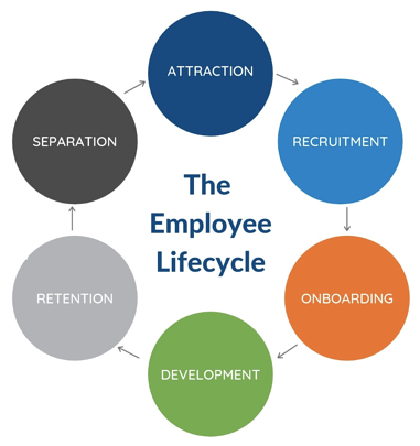 employee experience in the employee life cycle